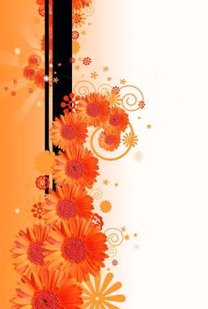 gerber: gerber daisy flower background Stock Photo