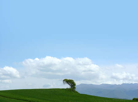 lonliness: tree in the sky