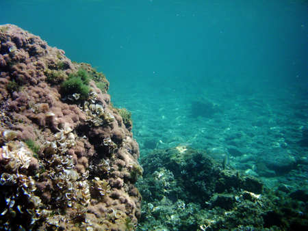 nekton: Fresh underwater images full of marine life Stock Photo