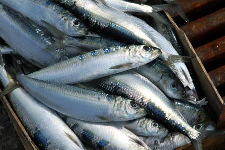 sardine: sardine su una bancarella del mercato di pesce  Archivio Fotografico