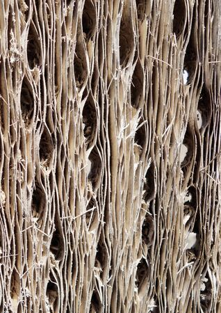 bark background: Cactus wood bark background texture Stock Photo