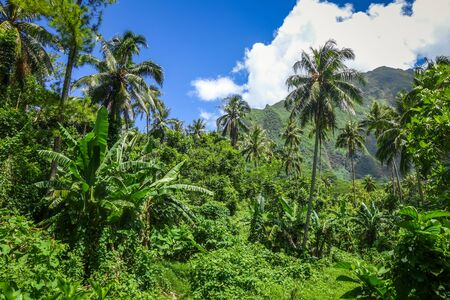 archipelago: Moorea island jungle and mountains landscape view. French Polynesia