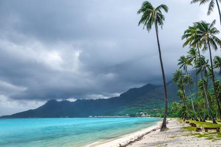 barrier island: Palm trees on Temae Beach in Moorea island. French Polynesia