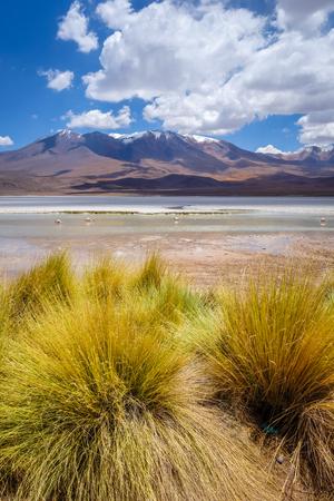 avaroa: Laguna Honda in sud Lipez Altiplano reserva Eduardo Avaroa, Bolivia