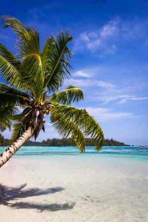 Paradise tropical beach and lagoon in Moorea Island. French Polynesia