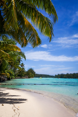 Paradise tropical beach and lagoon in Moorea Island. French Polynesia