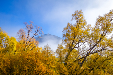 Fog on yellow tree forest in New Zealand mountains