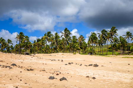 Palm trees on Anakena beach, easter island, Chile