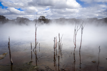 Misty lake and forest in Rotorua volcanic area, New Zealand