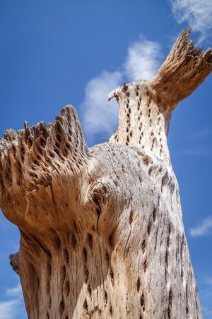 dry giant cactus detail in the Tilcara quebrada, Argentina