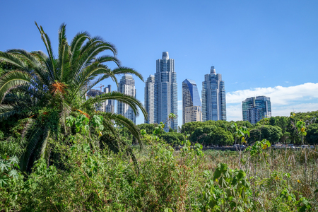 Buenos Aires cityscape, view from Costanera Sur ecological reserve