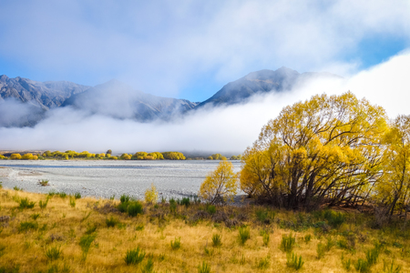 Yellow forest and river in New Zealand Alps