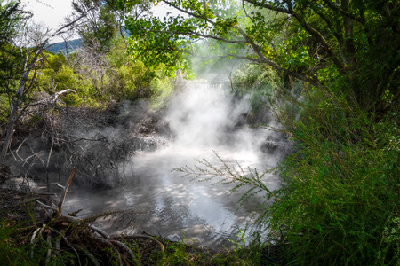Rotorua volcanic hot springs in forest, New Zealand