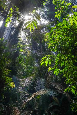 Jungle rainforest landscape. Taman Negara national park, Malaysia Stock Photo