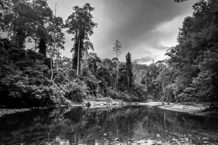 River in Jungle rainforest. Taman Negara national park, Malaysia Stock Photo