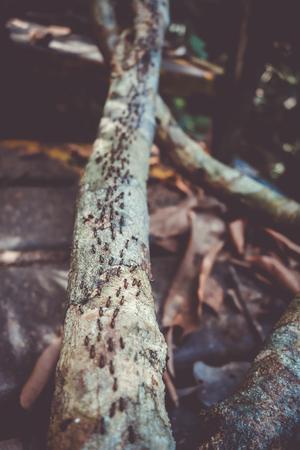 Termites colony in Taman Negara national park, Malaysia