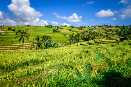 Jatiluwih paddy field rice terraces in Bali, Indonesia