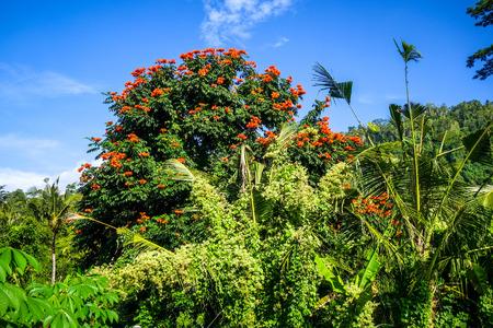 Plantations in green fields, Sidemen village, Bali, Indonesia Stock Photo