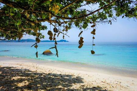 Hanging coral on Turtle Sanctuary Beach, Perhentian Islands, Terengganu, Malaysia