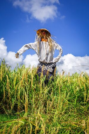 Straw scarecrow in Jatiluwih paddy field rice terraces Bali, Indonesia