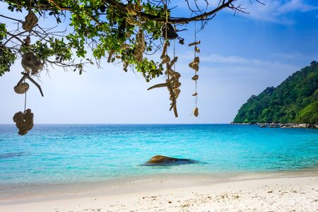 Hanging coral on Turtle Sanctuary Beach, Perhentian Islands, Terengganu, Malaysia