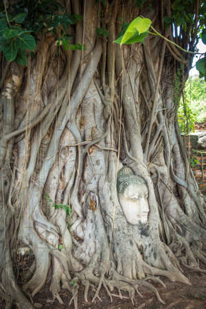 Buddha Head in Tree Roots, Wat Phra Mahathat temple, Ayutthaya, Thailand