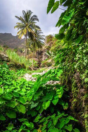 Paul Valley landscape in Santo Antao island, Cape Verde, Africa Banque d'images - 143236034