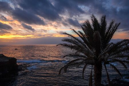 Ocean view and palm tree at sunset in Santo Antao island, Cape Verde, Africa