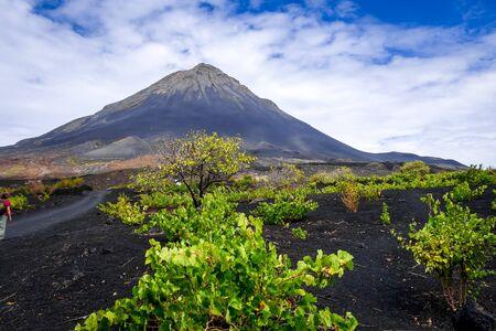 Pico do Fogo and vine growing in Cha das Caldeiras, Cape Verde Stockfoto