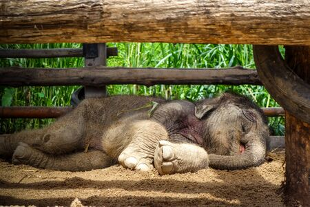 Baby elephant in protected park, Chiang Mai, Thailand, Asia Stockfoto