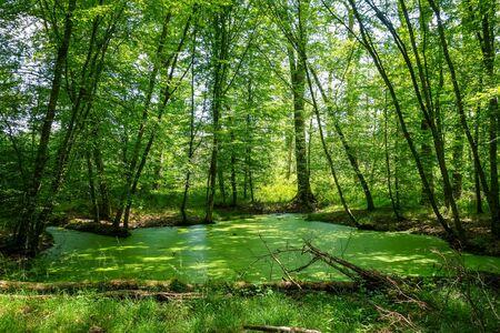 Fontainebleau green forest landscape near Paris, France