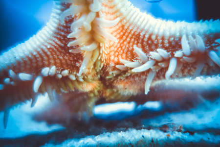 Starfish underwater close-up view. Macro photography Standard-Bild