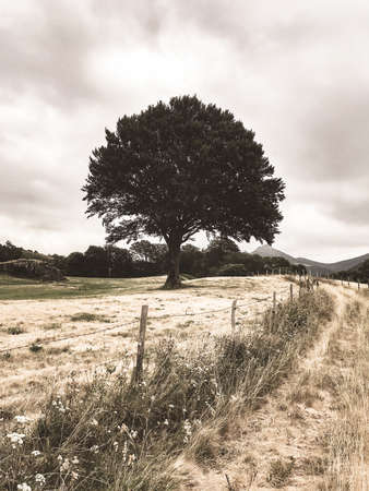 One single tree in a field. Vintage colored photography Standard-Bild