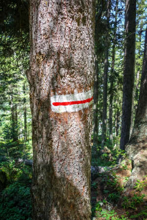 White and red mark on a tree trunk in pralognan forest, French alps.