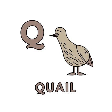 Vector Cute Cartoon Animals Alphabet. Quail Illustration  イラスト・ベクター素材