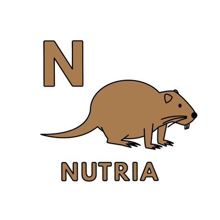 Vector Cute Cartoon Animals Alphabet. Nutria Illustration
