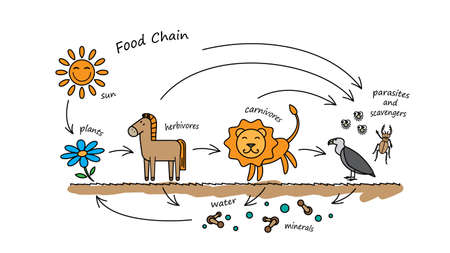 Funny Animals Food Chain Illustration