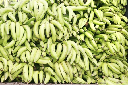 Green plantains (bananas)  photo