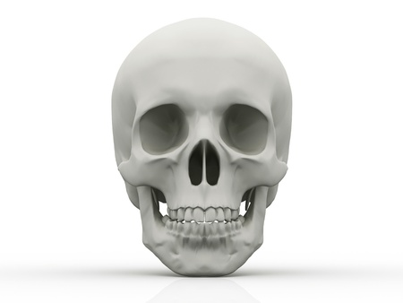 3d human skull isolated on white background  photo