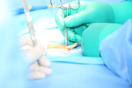 surgical: Cirugía de hernia abierta Foto de archivo