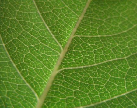 a green leaf Stock Photo