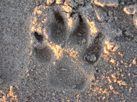 dogs footprint in the sand Stock Photo