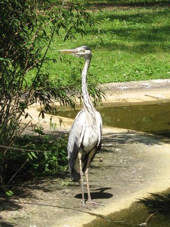wandering: a bird wandering around