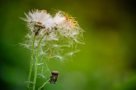 White Grass Flowers