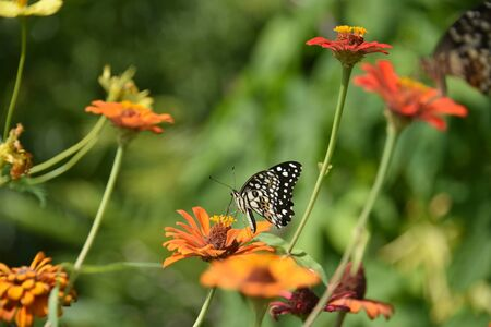 Butterflies fly on colorful flowers.