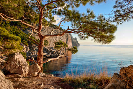 Summer landscape with wooded cliffs by the sea. Black Sea. Southern coast of Crimea, Ukraine, Europe