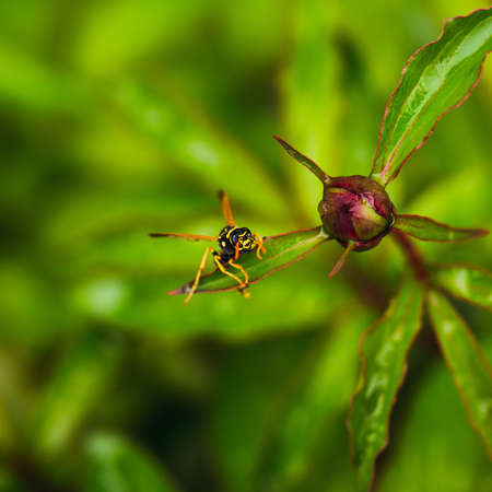abdomen yellow jacket: wasp of the garden on a green wild flower. selective focus on head. Stock Photo