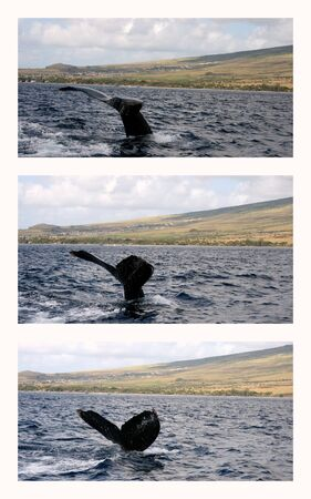 Humpback Whale Tale Collage With West Maui Mountains photo