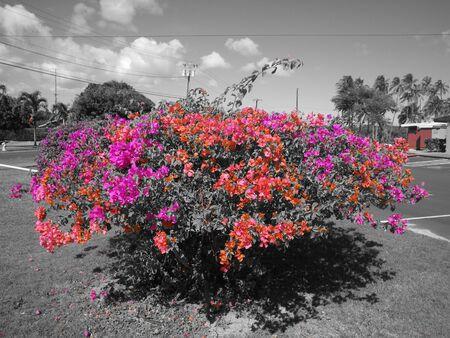 tropical shrub: Tropical Shrub in Kauai