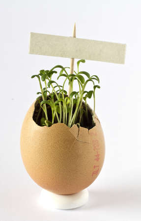 Garden cress growing in an empty egg shell with sign Stock Photo